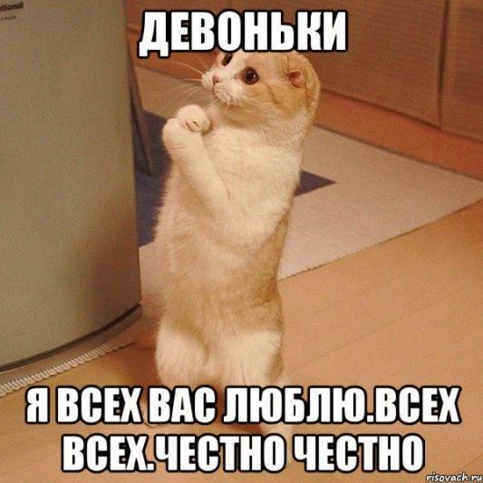 kote_21365112_orig_.jpg